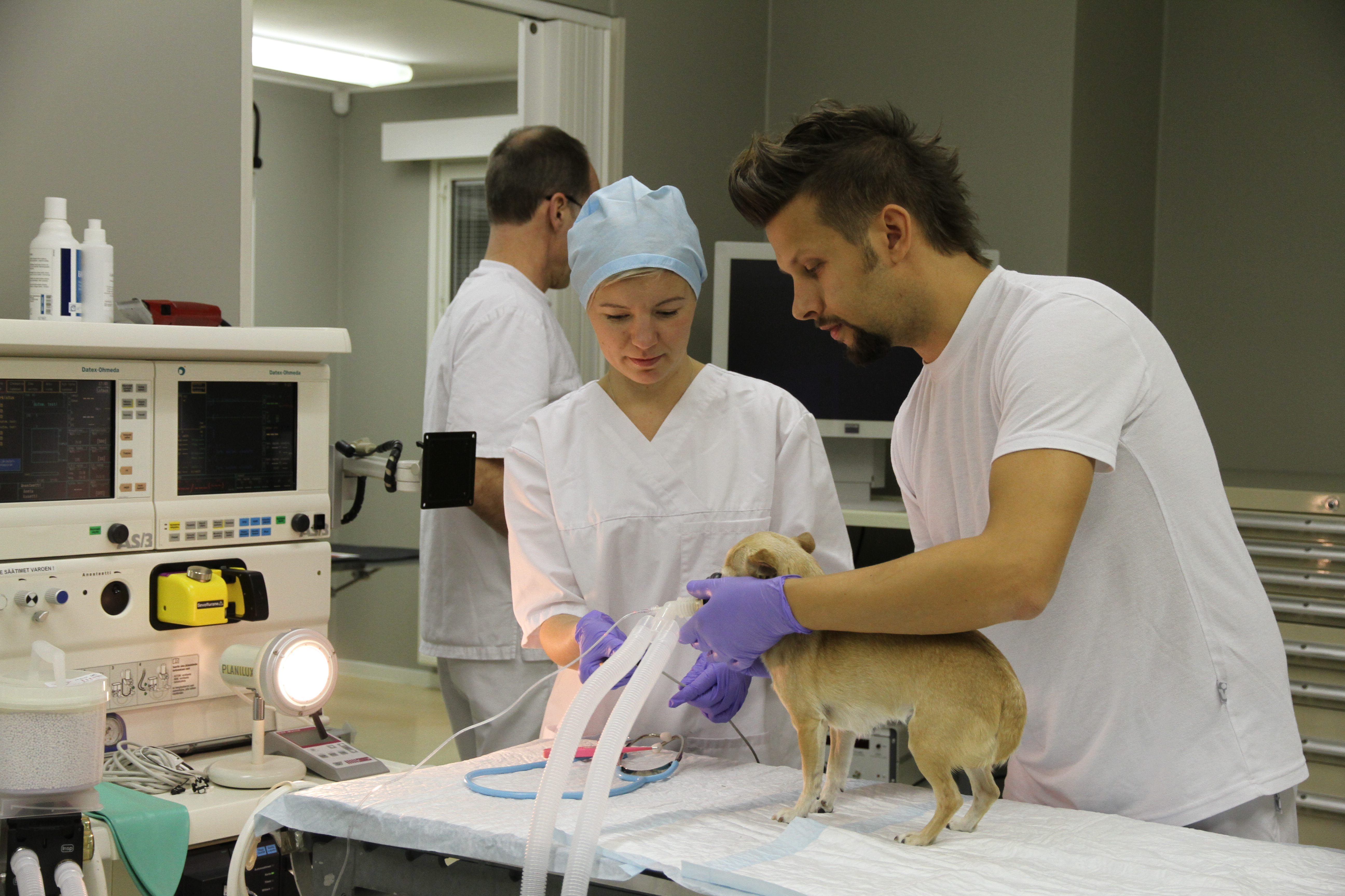 Turvallinen anestesia